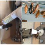 Нанесение и действие геля на насекомых