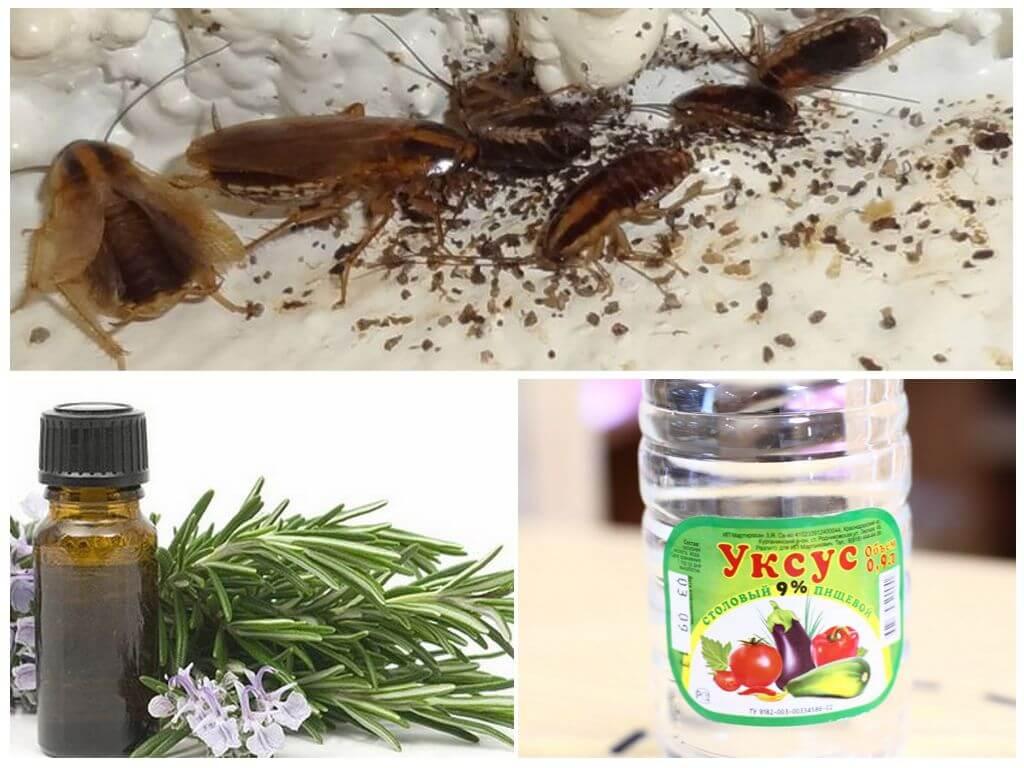 Уксус и эфирные масла в борьбе с тараканами