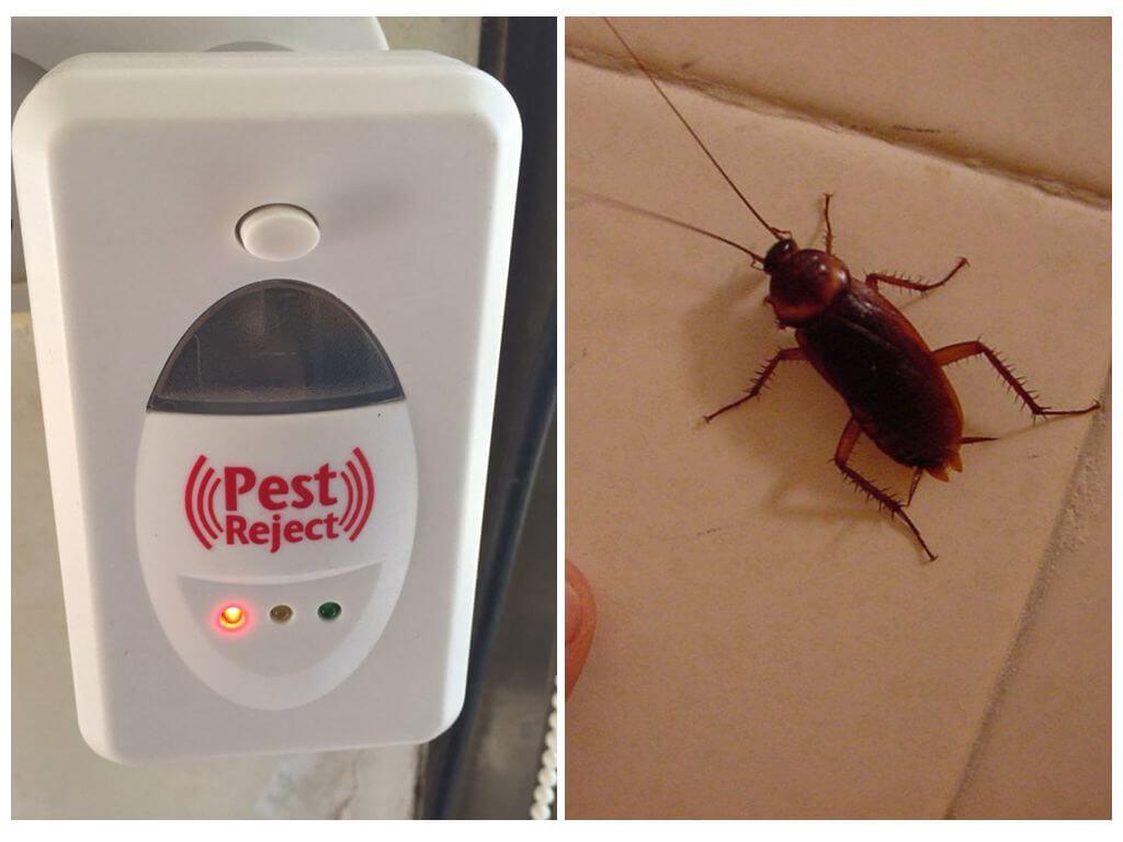 Борьба с тараканами при помощи отпугивателя Pest Reject