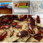 Отрава от тараканов в виде карандаша и порошка