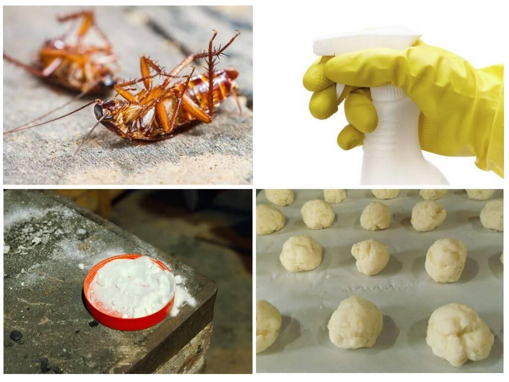 Способы применения борной кислоты от тараканов