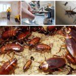 Меры борьбы с тараканами в общежитии