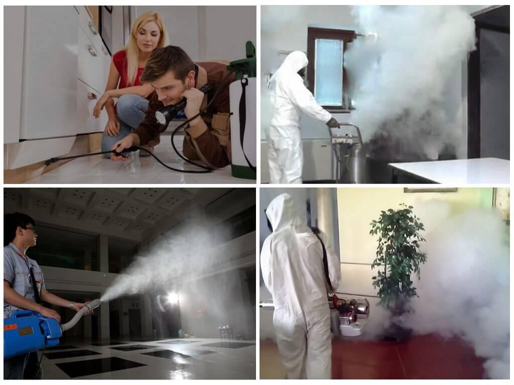 Профессиональные методы борьбы с тараканами