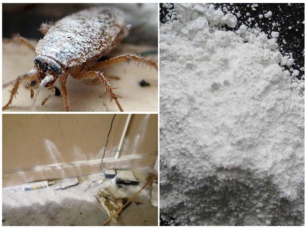 Применение дуста от тараканов