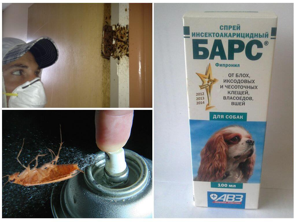 Применения средства Барс от тараканов