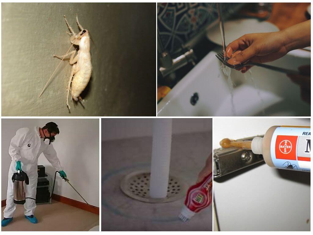 Борьба с белыми тараканами в квартире