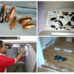 Борьба с тараканами на кухне