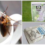 Борьба с тараканами с помощью порошков