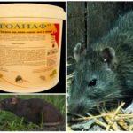Яд Голиаф для борьбы с крысами