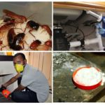Химические методы уничтожения прусаков