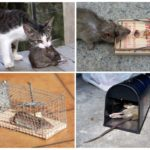 Способы борьбы с крысами