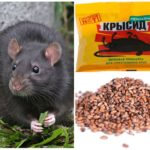 Крысид для борьбы с грызунами
