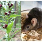 Крысогон от мышей