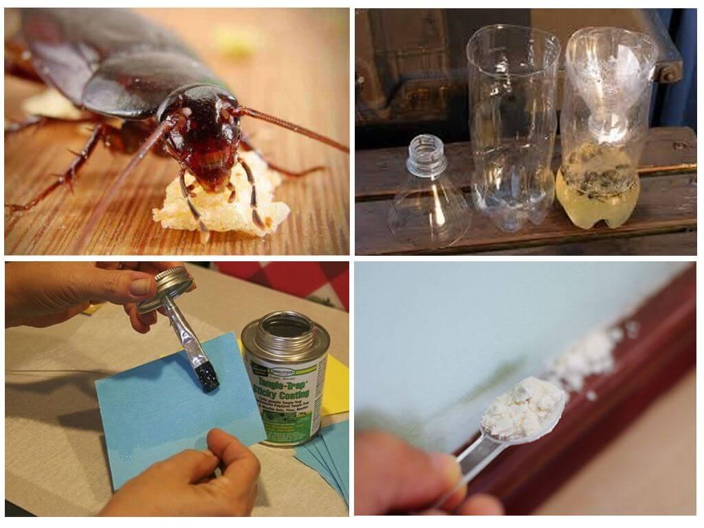 Ловушки от тараканов своими руками