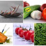 Генно-модифицированные продукты питания и тараканы