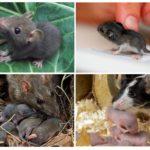 Мышата и крысята