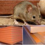 Мыши и пеноплекс