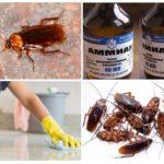 Применение нашатыря от тараканов