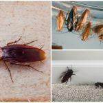 Вред от тараканов для человека