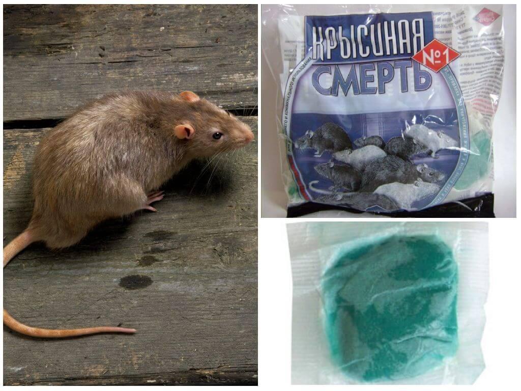Отрава для борьбы с крысами