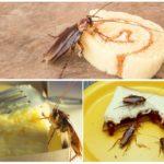 Питание тараканов