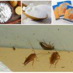 Приманка для тараканов из крахмала, сахара и ванили