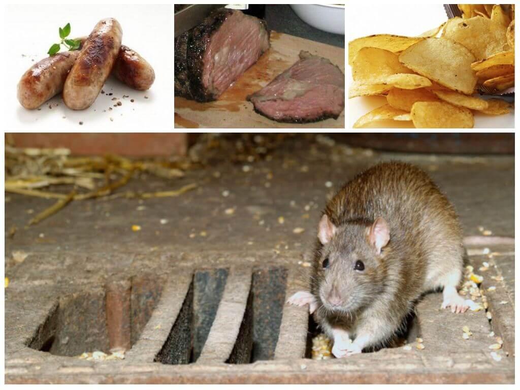 Приманки для крысы