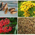 Растения отпугивающие прусаков