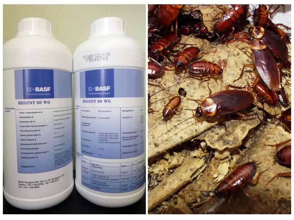 Регент для борьбы с насекомыми