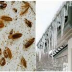 Холод против тараканов