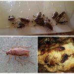 Среда обитания таракана
