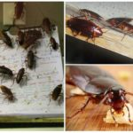 Тараканы стасики