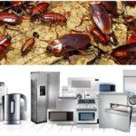Влияние бытовой техники на тараканов