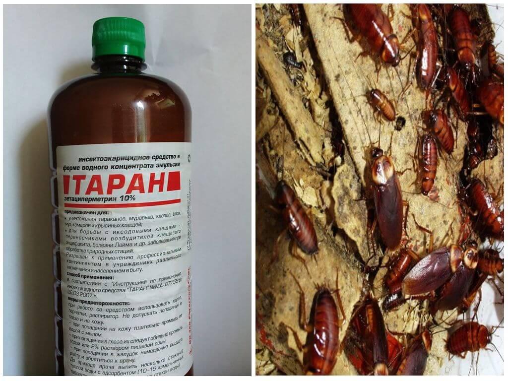 Инсектицидный препарат Таран от тараканов