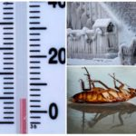 Низкая температура вызывает гибель тараканов