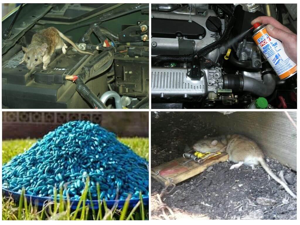 Борьба с крысами в автомобиле