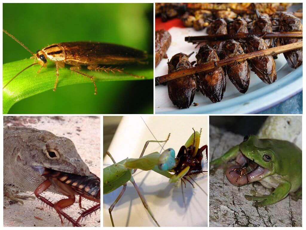 Животные которые едят тараканов