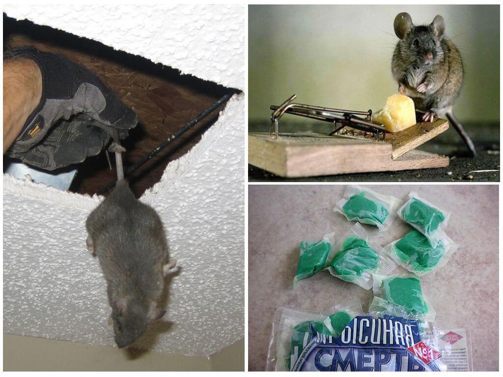 Причины мышиного запаха
