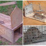 Живоловки для крыс