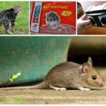 Методы избавления от мышей