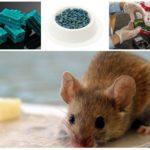 Виды яда от мышей