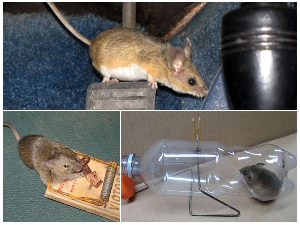 Мыши в машине