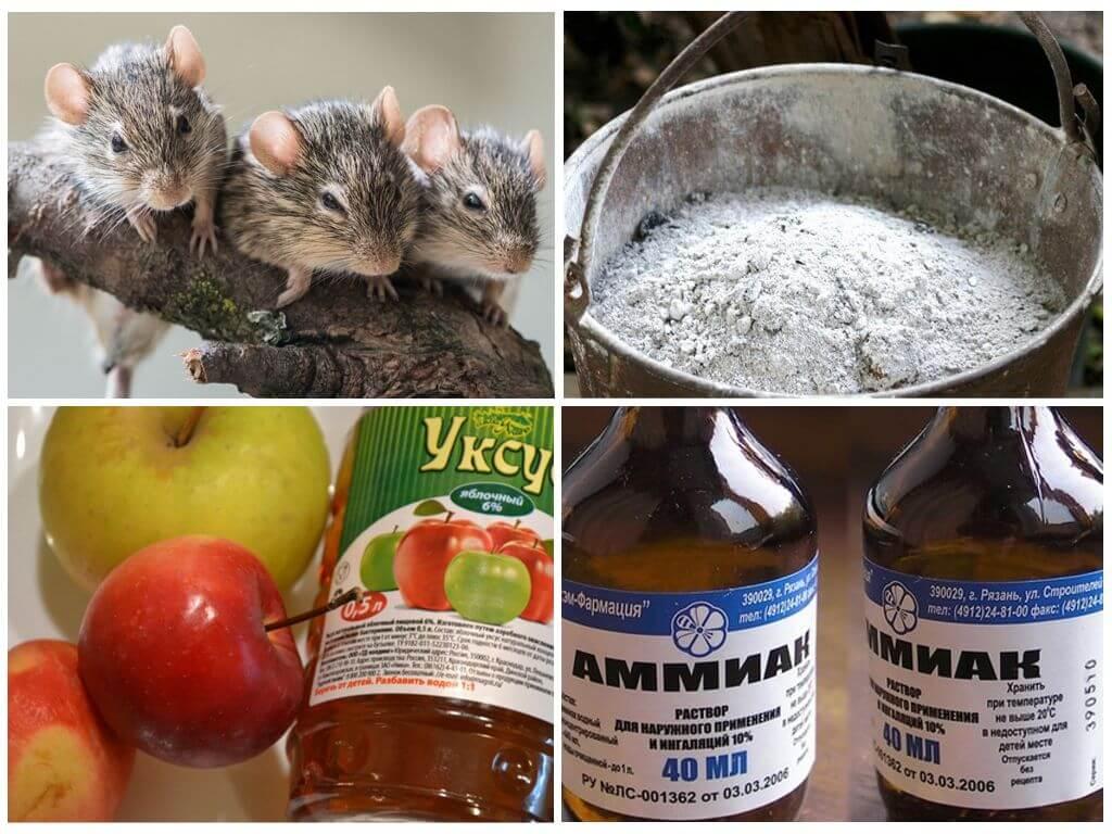 Народные методы избавления от мышей
