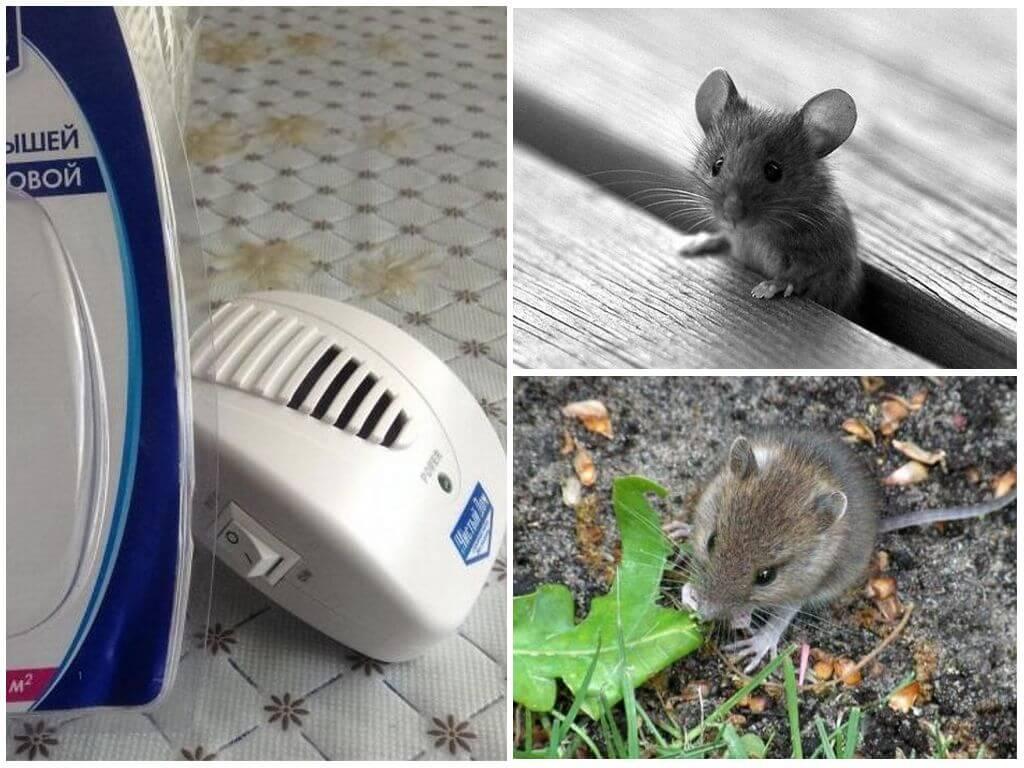 Ультразвуковой отпугиватель от крыс и мышей Чистый дом