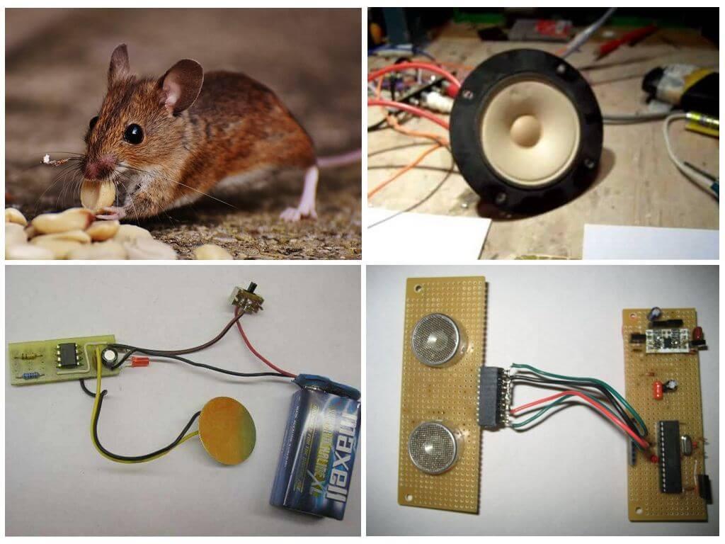 выбор ультразвукового отпугивателя для мышей