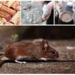 Отрава для мышей своими руками