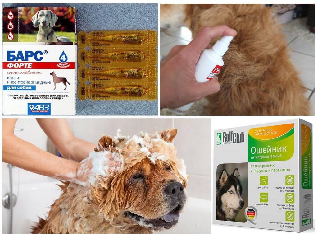 Препараты от вшей у собак