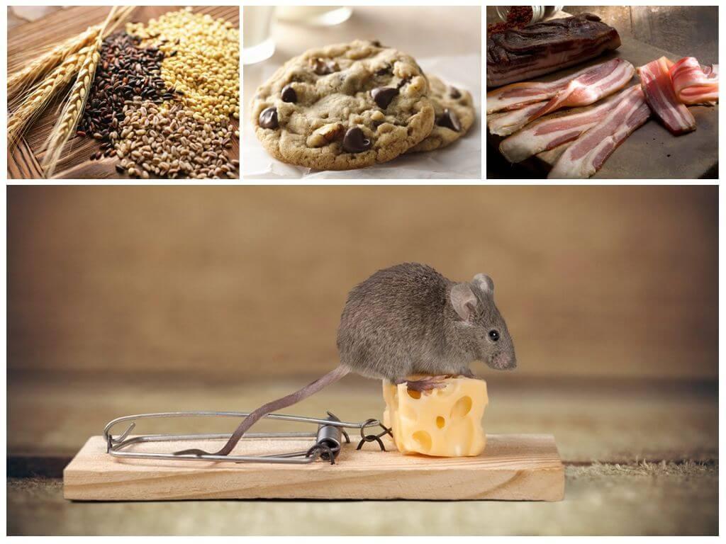 Лучшие приманки для мышей в мышеловку