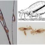 Размножение насекомых