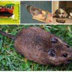 Чего боится мышь